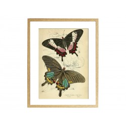 "Poster ""Butterfly"""