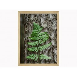"Framed Poster ""Fern"""