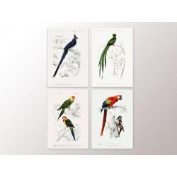 "Set posters ""Birds"""
