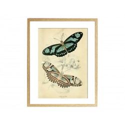 """Poster """"Butterfly"""""""