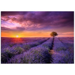 """Poster """"Provence"""""""
