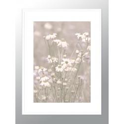 "Framed Poster ""Chamomile"""