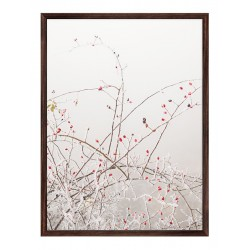 """Framed Poster """"Rosehip"""""""