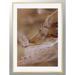 "Framed Poster ""Dragonfly"""