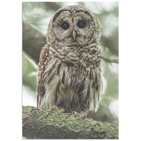 "Poster ""Cute Owl"""