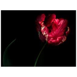 """Poster """"Tulip"""""""