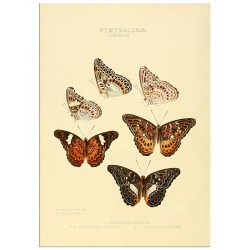"""Poster """"Botany. Butterflies"""""""