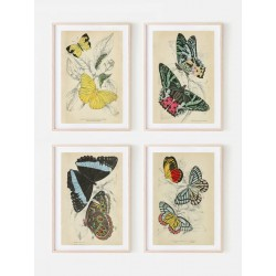 """Set posters in rame """"Botany. Butterflies"""""""