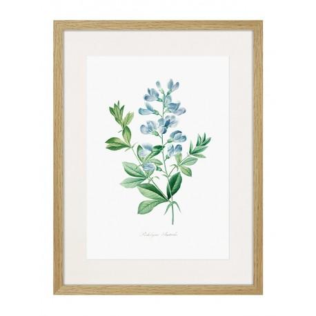 """Framed Poster """"Botany. Butterflies"""""""
