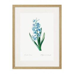"""Framed Poster """"Flowers. Botany"""""""