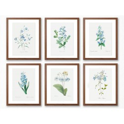 """Set posters in rames """"Flowers. Botany"""""""