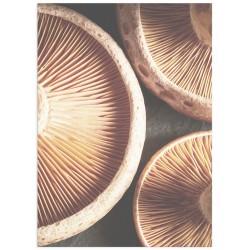 """Poster """"Mushrooms"""""""
