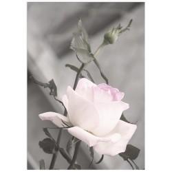 "Poster ""Rose"""