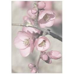 "Poster ""Cherry blossom"""