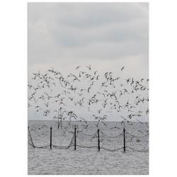 "Poster ""Seagulls"""
