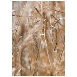 """Poster """"Grass"""""""
