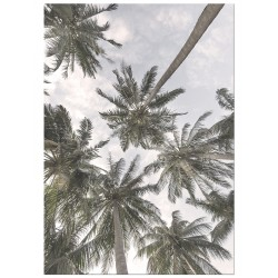 """Poster """"Palm"""""""