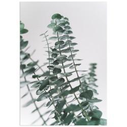 "Poster ""Eucalyptus"""