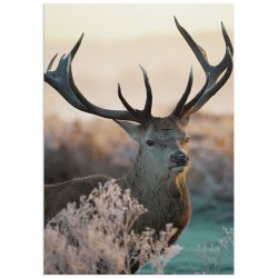 """Poster """"Deer"""""""