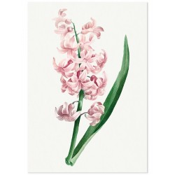 """Poster """"Hyacinths"""""""